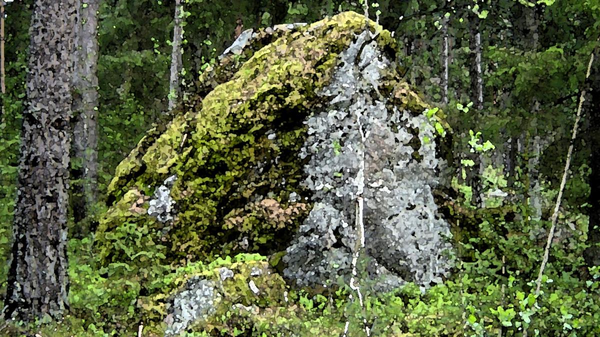 Arvaamaton metsä. Kuva: Tuomo Rouhiainen