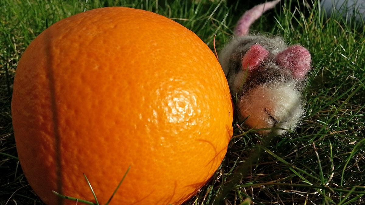 Paavo-hiiri ja appelsiini