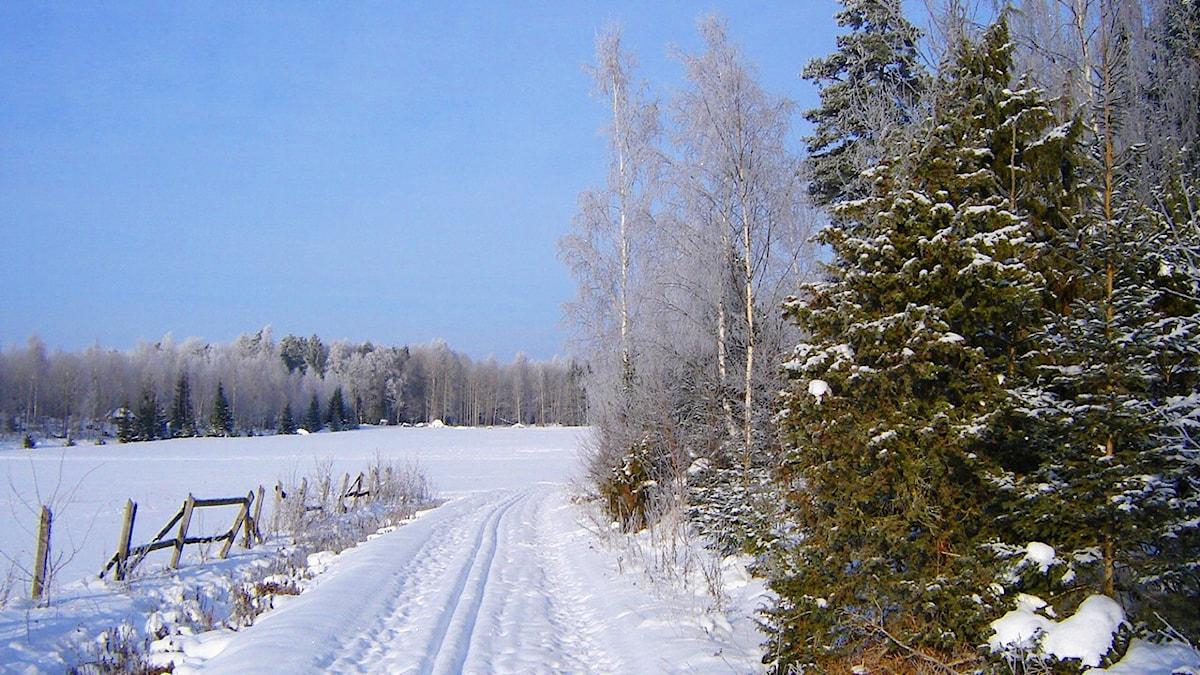 Kuvassa pelto, metsää ja hiihtolatu.