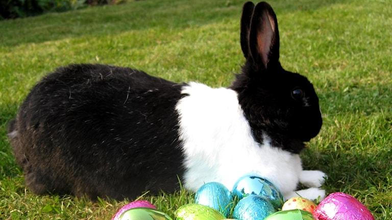 Pääsiäispupu on nurmikolla pääsiäismunien keskellä.