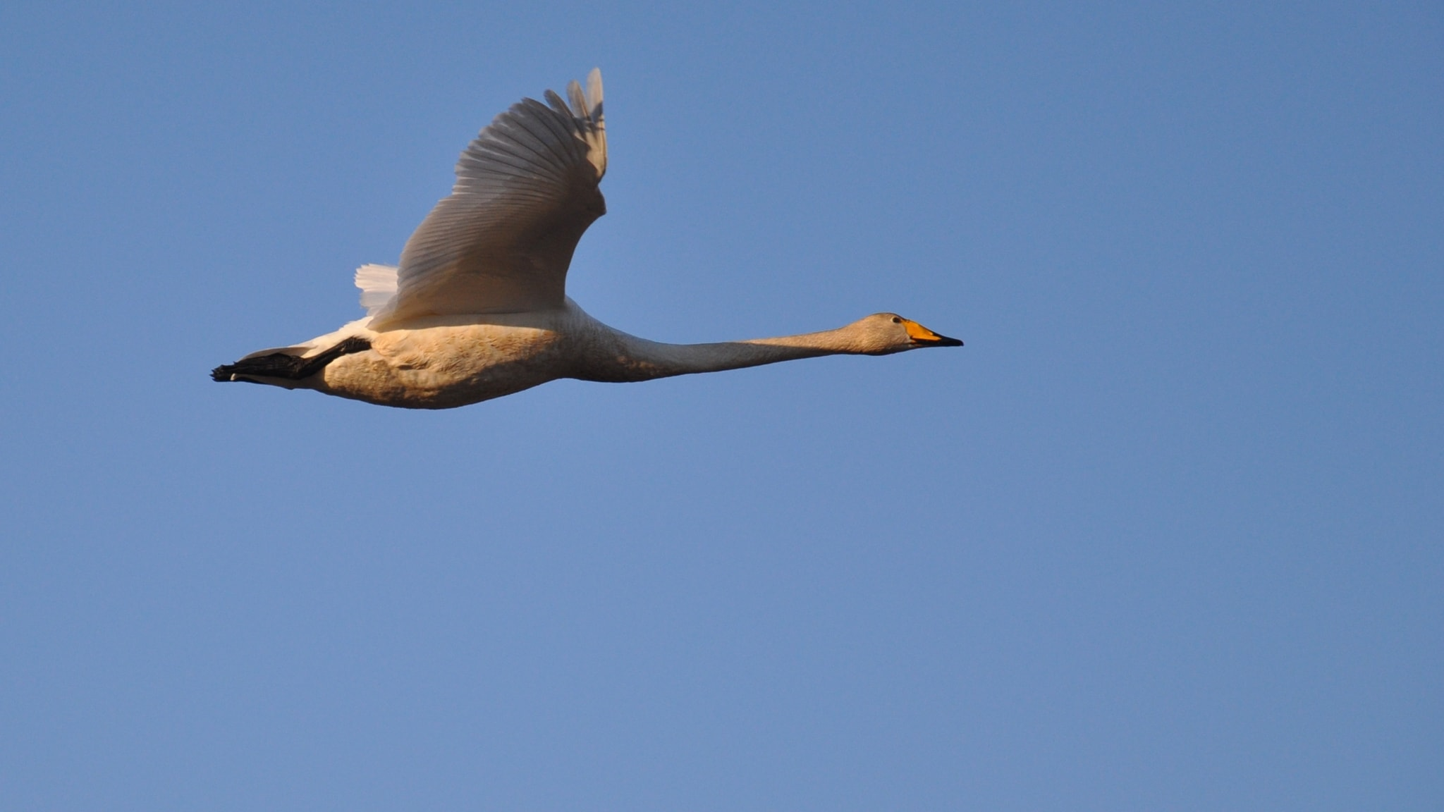 Lennäpä lintu