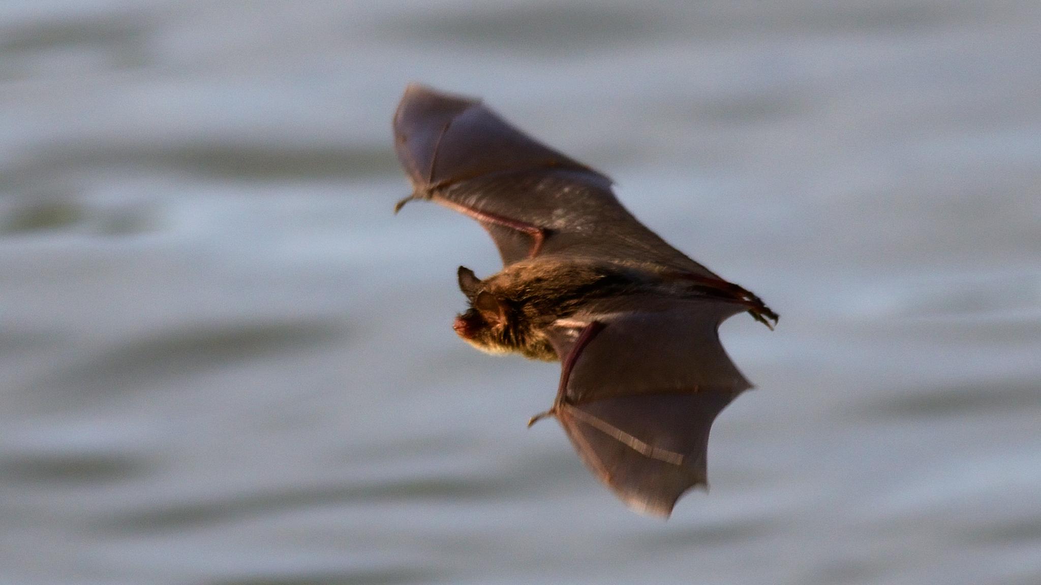 Satu: Voiko hiiri lentää?