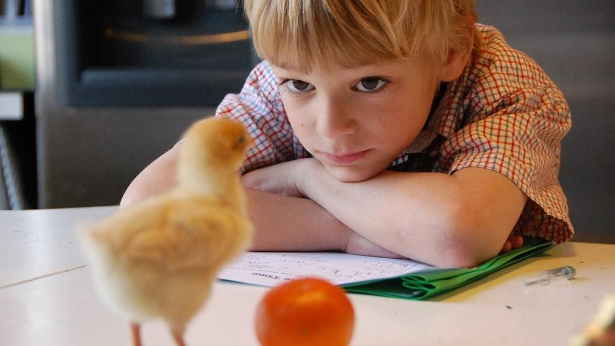 Poika ja kananpoika