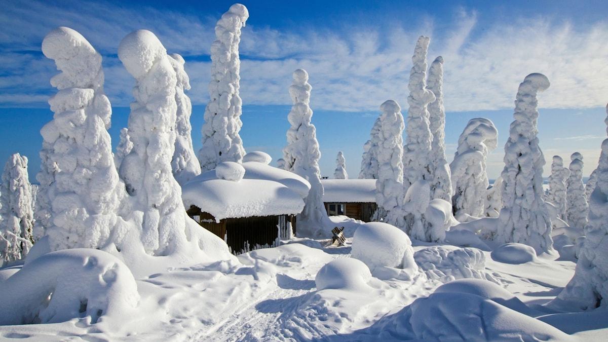 Maisema Riisitunturilta talvella