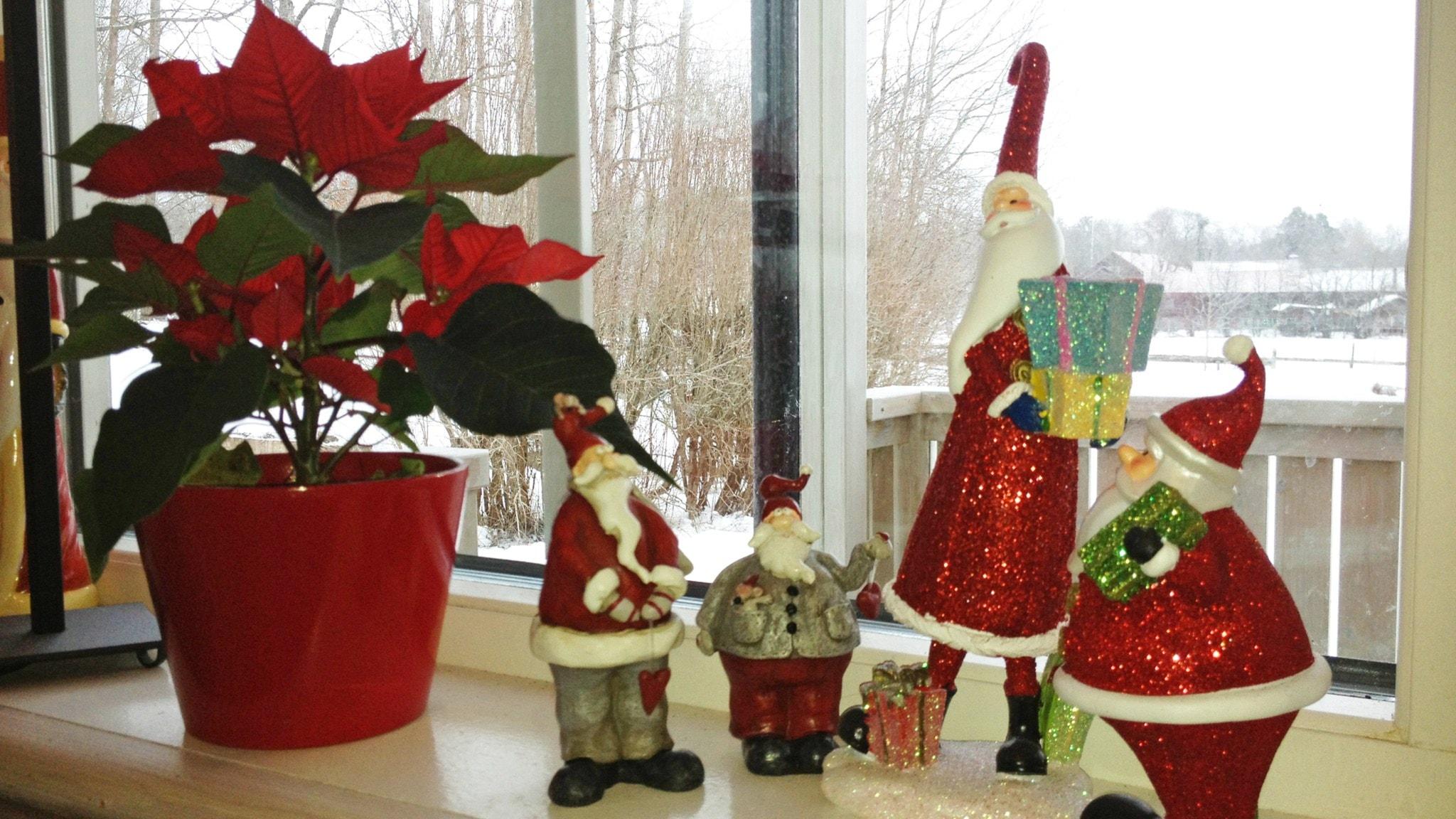 Joulu se tulla jolkuttaa...