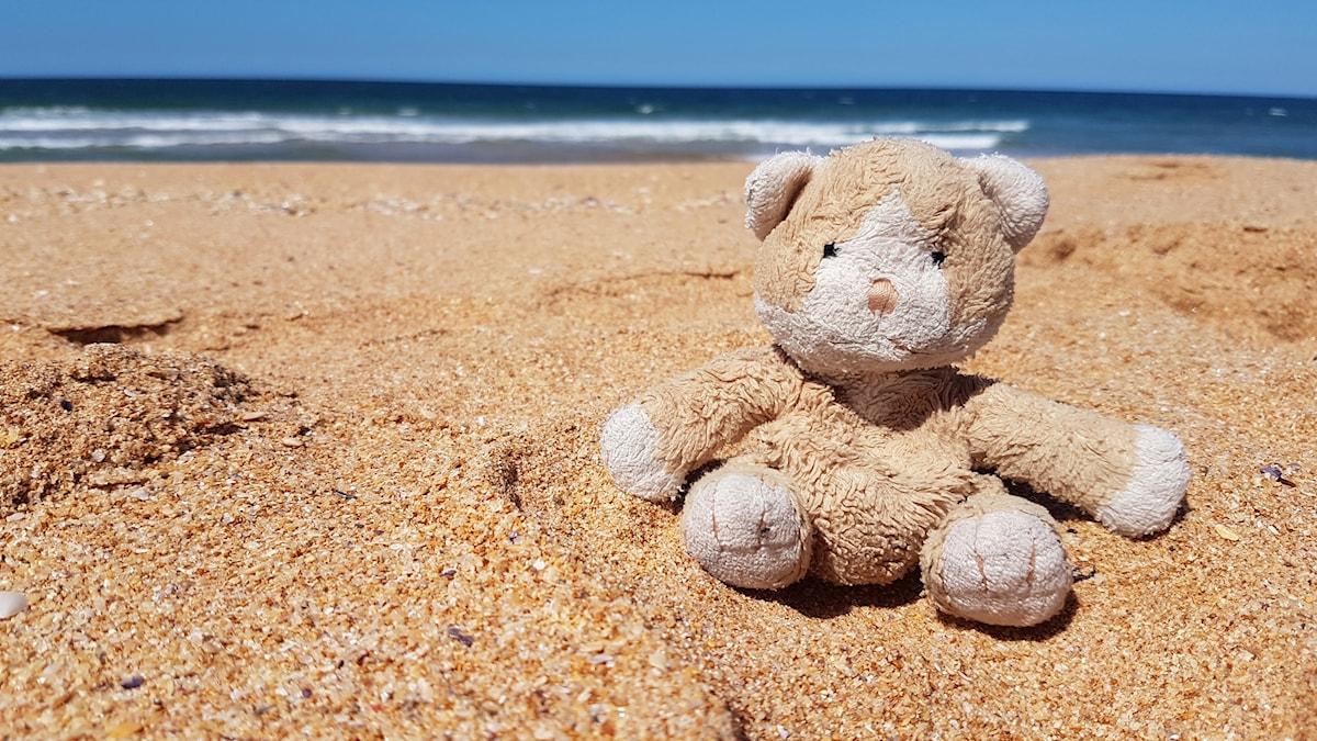 Kissa istuskelee Palm Beachin rannalla Australiassa.