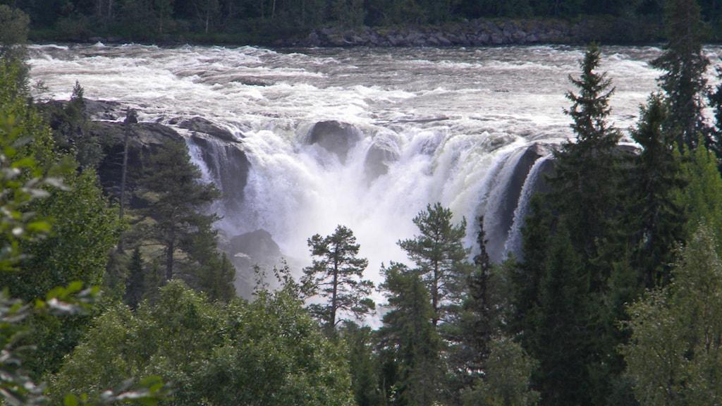 Det berömda Ristafallet som fick gestala Glupafallet i filmen om Ronja Rövardotter. Bild från Curt Axelsson