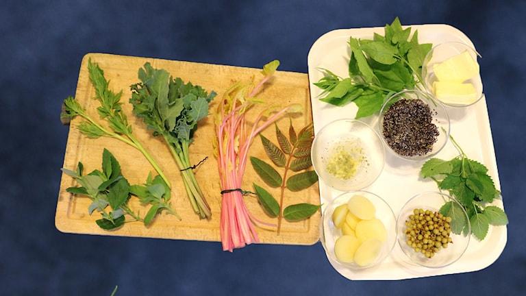 Ett urval av växter och örter som Christian Odberger som är lärare i permakultur har tagit med sig.