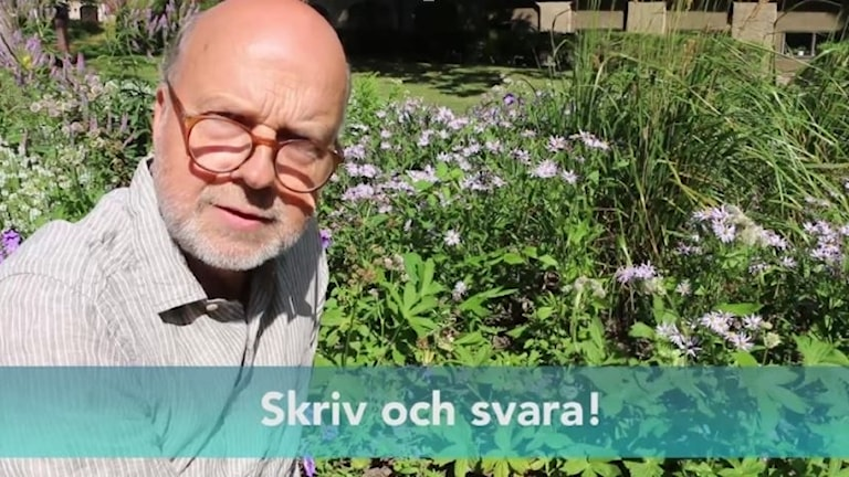 Gunnar Bolin sitter i Radiohusets prunkande trädgård och ser bekymrad ut.