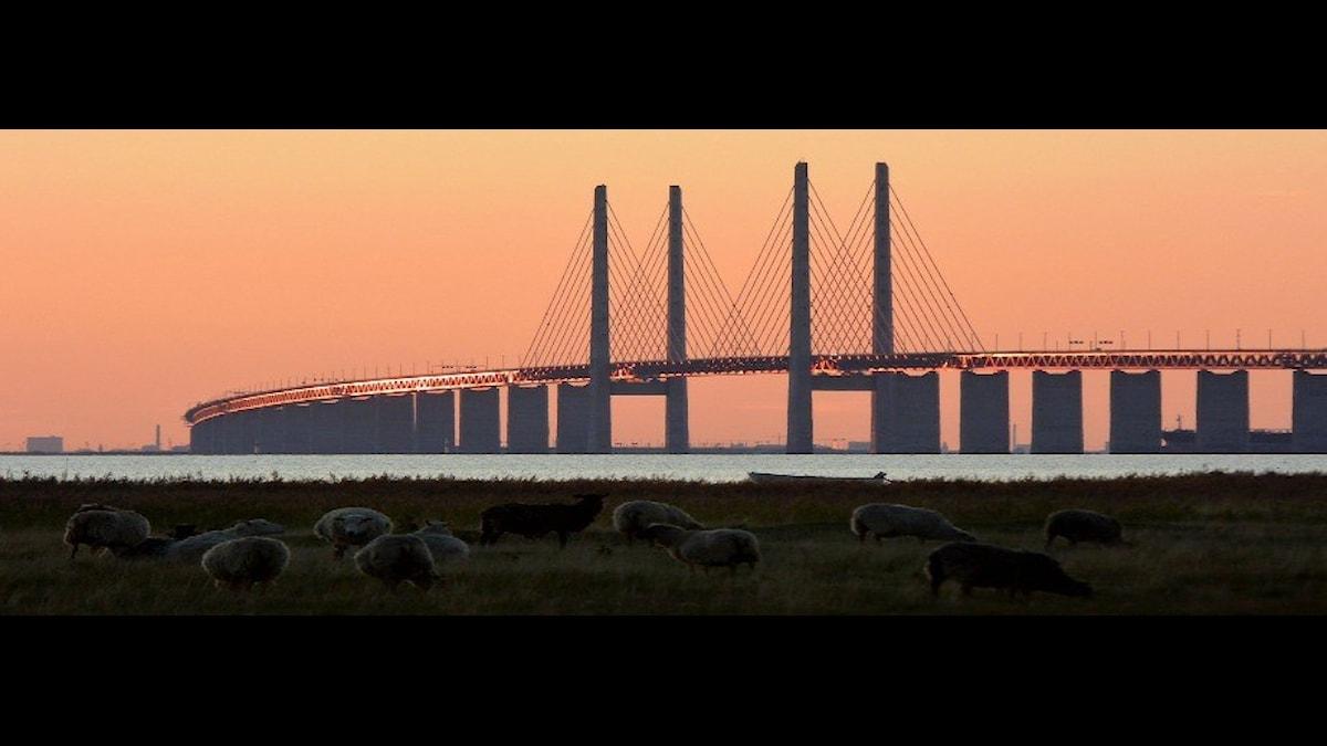 Hur ska trafiken över bron flyta? Johan Nilsson/TT
