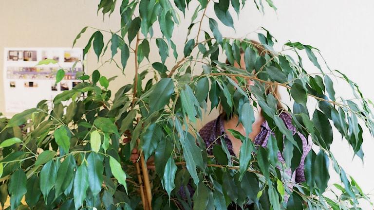 Vad ska kollegorna göra om de får syn på ett omslingrat par bakom kaffeautomaten? Det undrar Louise Epstein och vill reda ut vad som gäller - finns det någon allmän kärlekspolicy på jobbet. Detta illustrerar Louise genom att gömma sig bakom en stor grön planta i korridoren utanför tjänsterummet.