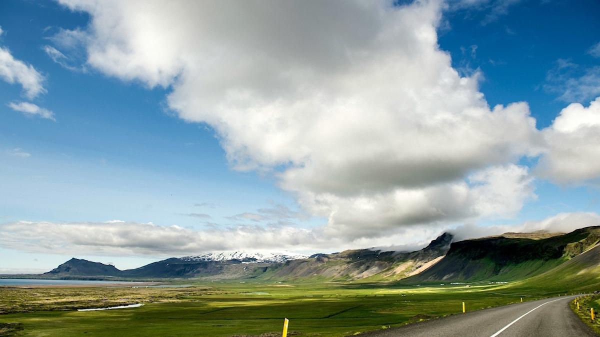 Isländska vidder