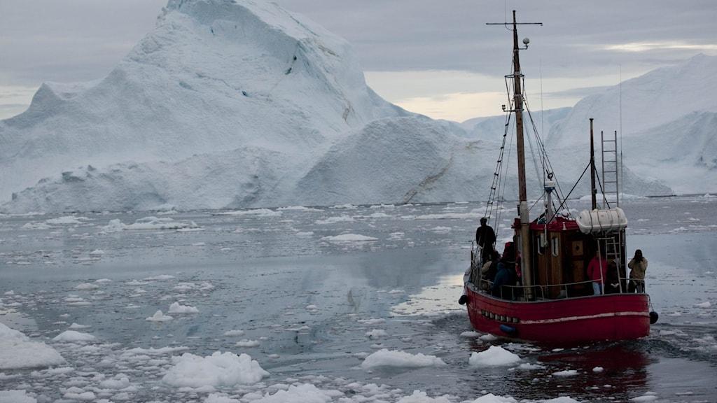 Isberg vid Grönland.