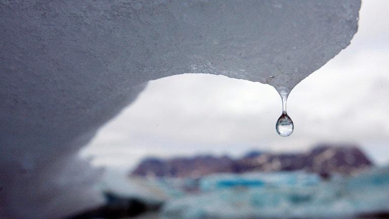 droppe från is