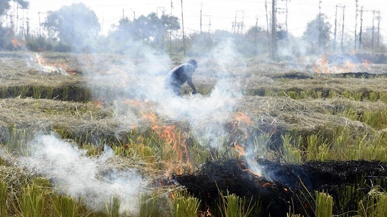 Fält med eld och rök, en person arbetar på fältet.
