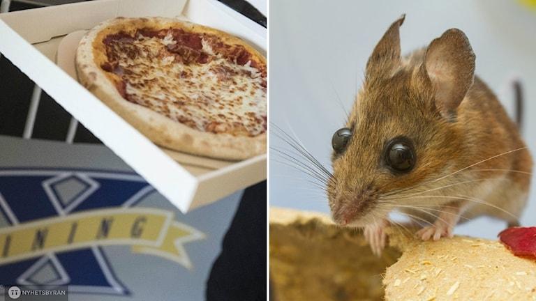 kollage pizza och råtta