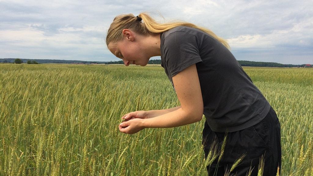 En kvinna i blont långt hår studerar spannmål i ett fält.