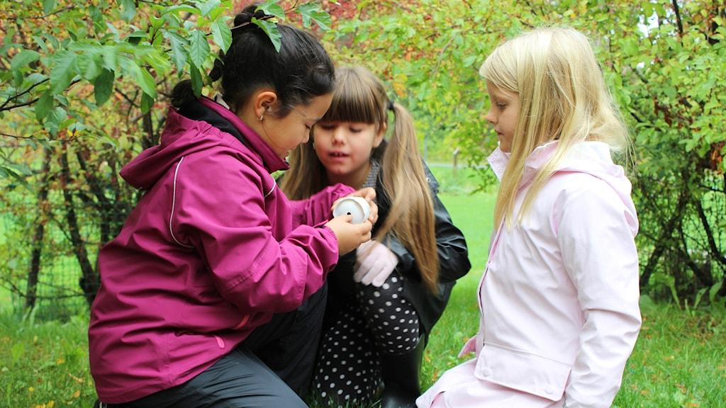 Tre barn letar nyckelpigor i en park
