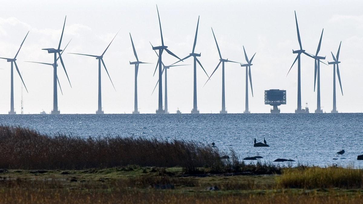 Flera vindkraftverk som står ute i havet en solig dag.