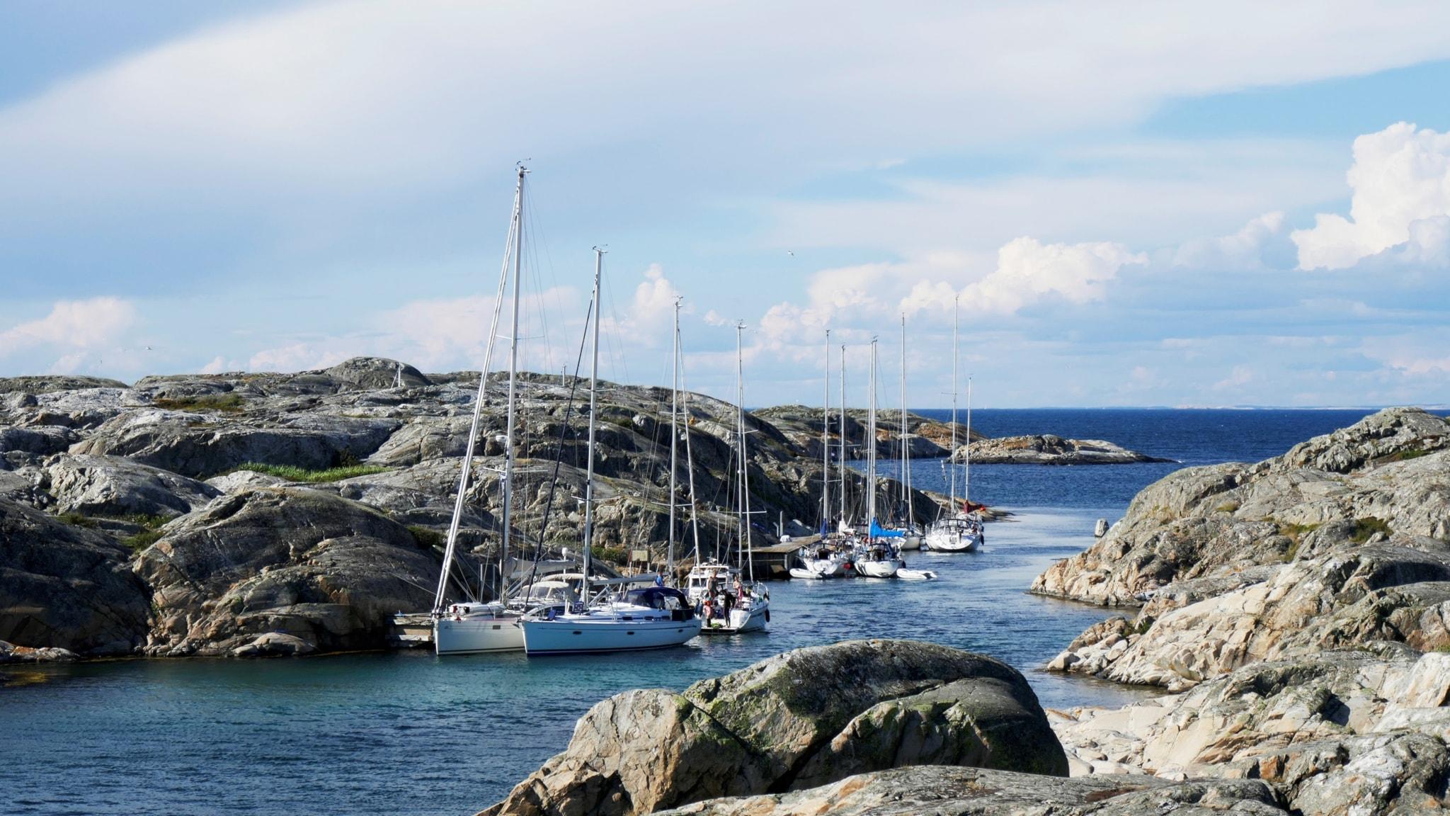 Från Väderöarna till Holmön – i Sjörapportens spår