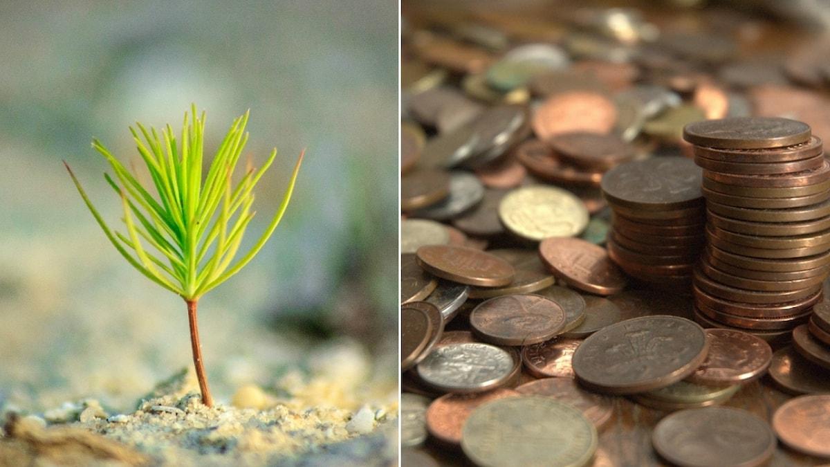 kollage av mynt och en grön liten planta