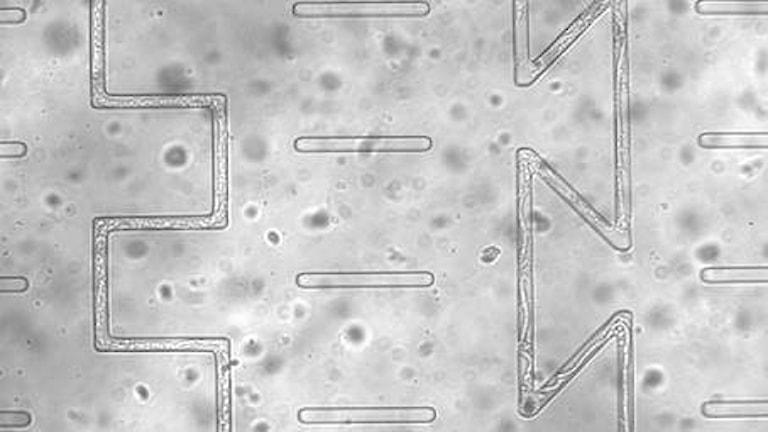 Svamp växer i ett mikrochip