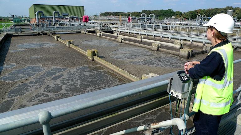 Forskaren Rosanna Kleemann blickar ut över reningsverk med brunt vatten i Slough