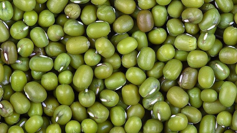 Att äta mer bönor är bra, menar Livsmedelsverket. Bönorna på bilden är mungbönor. Foto: Sanjay Acharya.