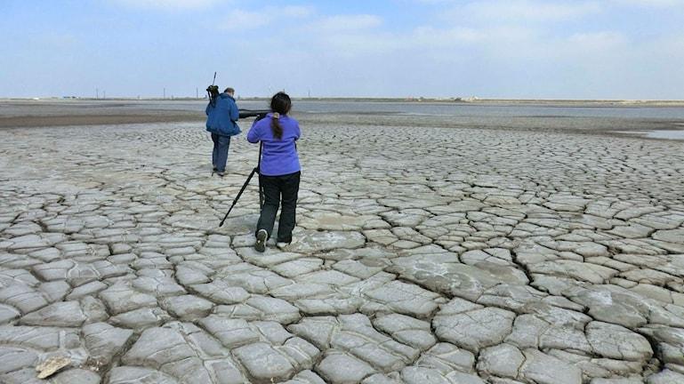 Fågelskådare promenerar på ett tidigare våtmarksområde som nu har blivit torrlagt.