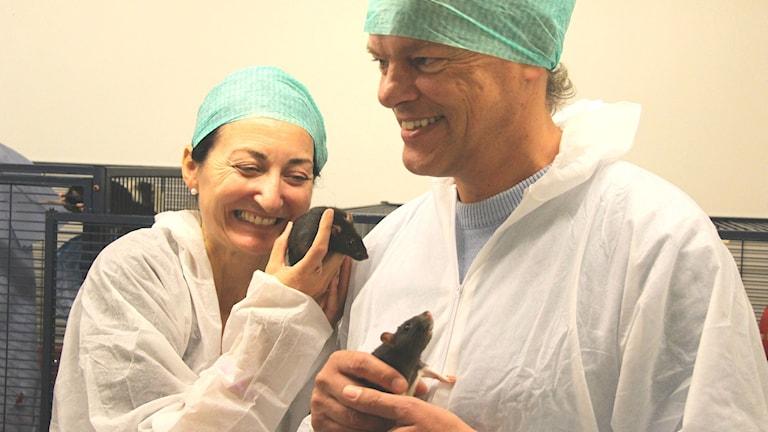 May-Britt Moser och Edvard Moser håller i råttor. Foto: Steinar Brandslet/NTNU