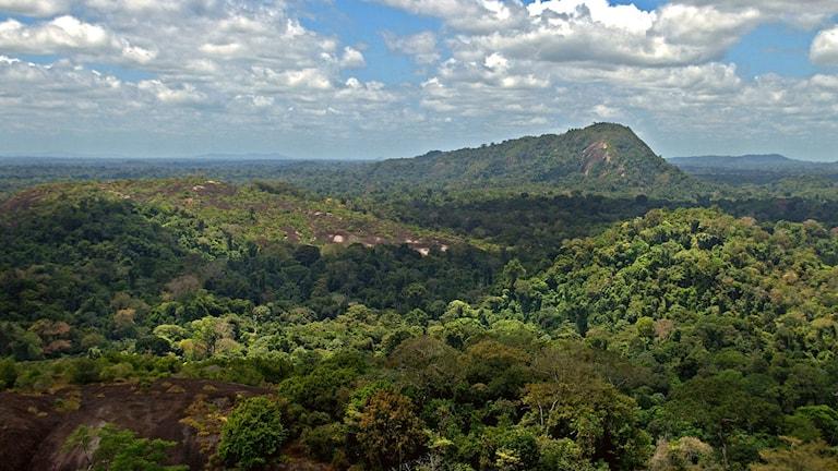 Djungel syns från hög höjd, vid horistonen sticker ett skogsklätt berg upp.