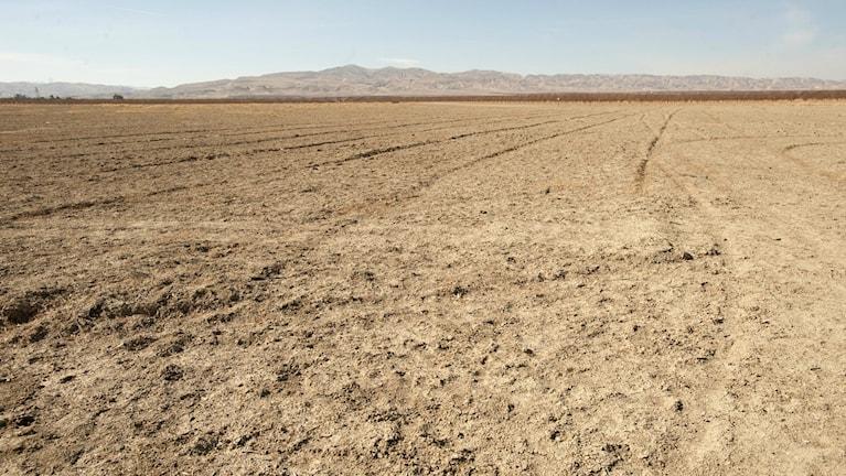 Uttorkade fält nära San Joaquin, Kalifornien. Foto: Gregory Urquiaga UC Davis