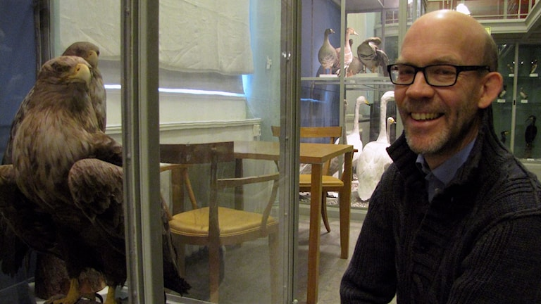 Hans Ellegren intill havsörnen på Zoologiska museet i Uppsala. Foto: Petra Olsson