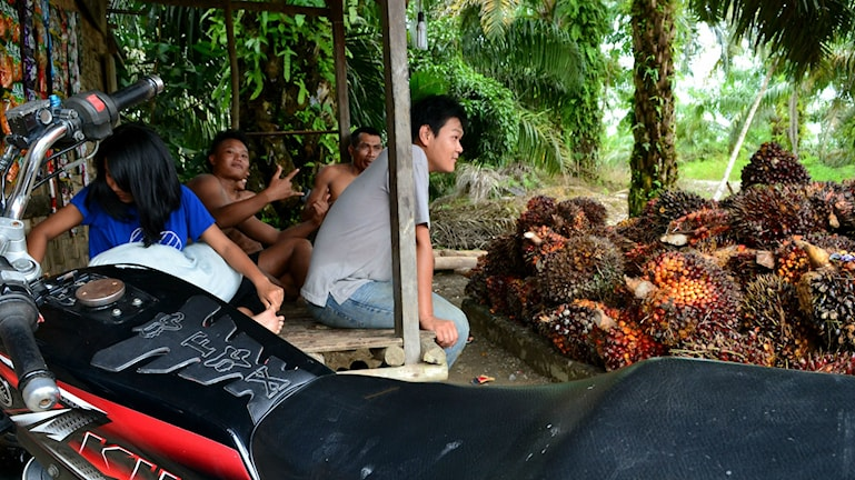 Arbetare sitter på bänk bredvid palmoljeklasar.