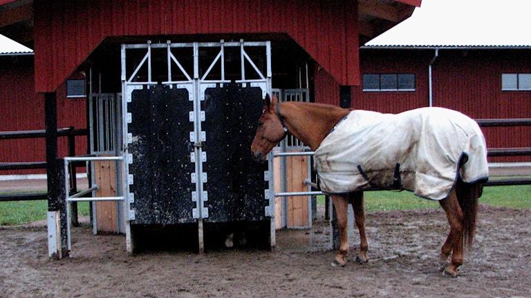 Häst står framför utfodringslucka.
