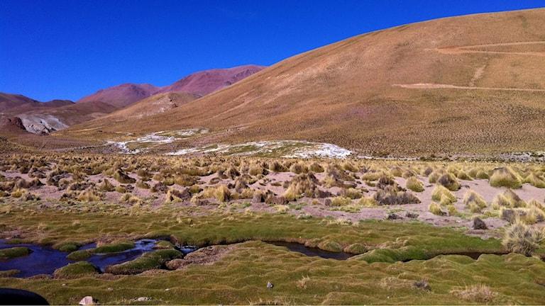 En bäck rinner genom ett bergslandskap i Anderna.