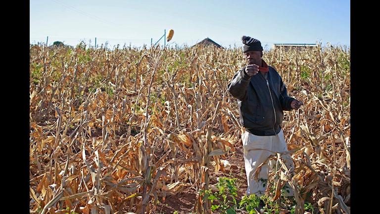 Lantbrukare i Afrika
