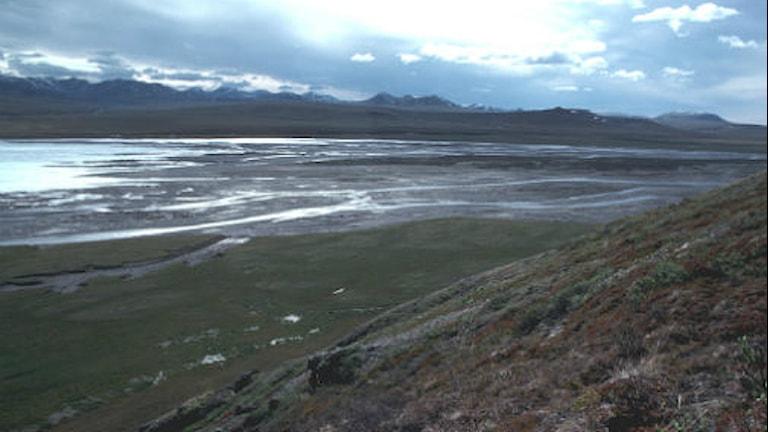 floder i fjällmiljö