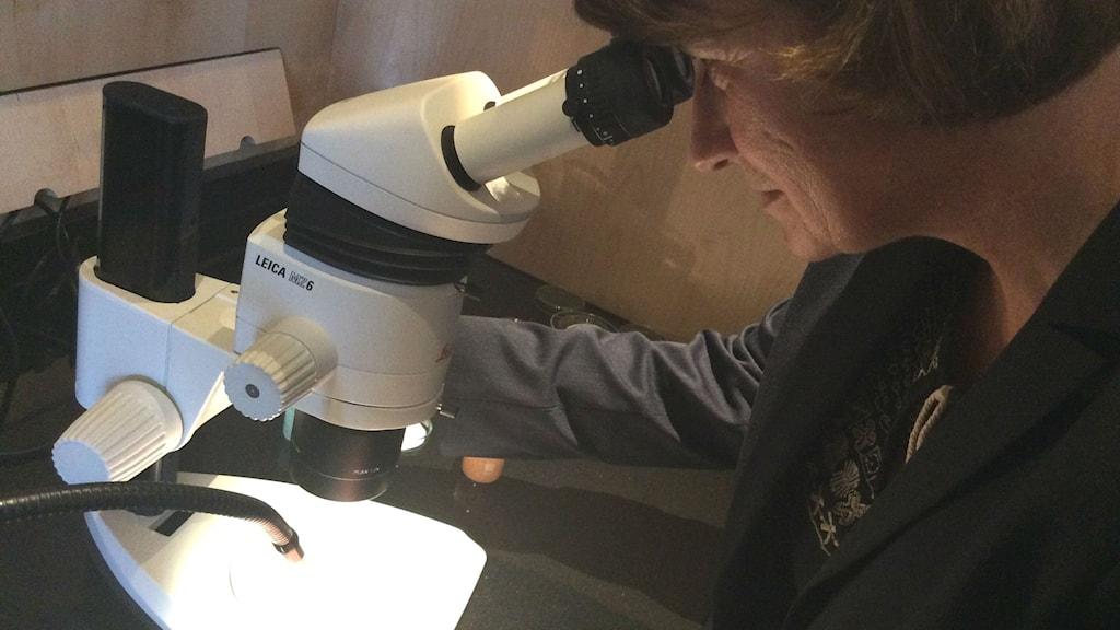 Katja Broeg tittar i mikroskop