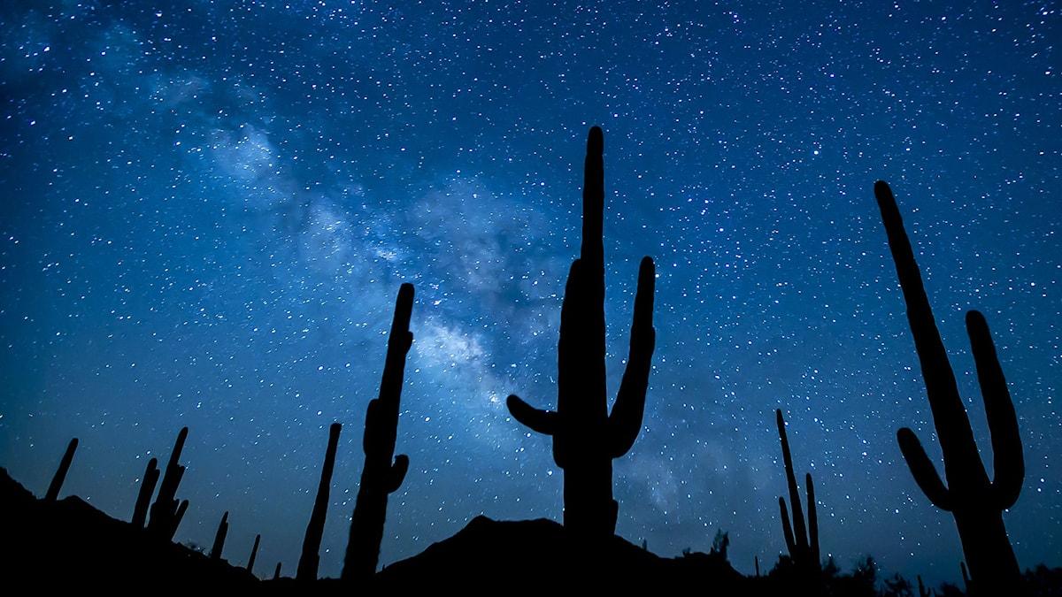 En stjärnhimmel syns med kaktusar i förgrunden