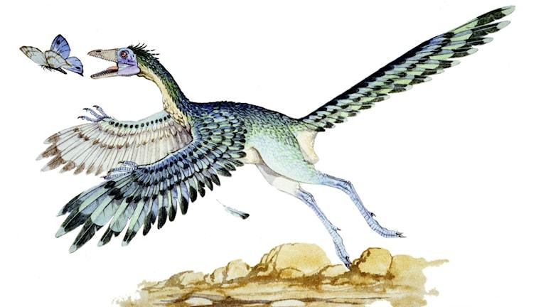 Fågelliknande donosaurie jagar en fjäril