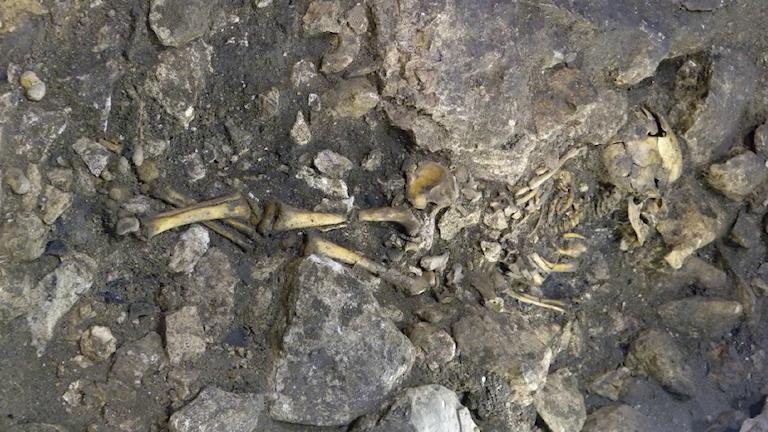 Skelett av människa i en grotta. Foto: Eneko Iriarte