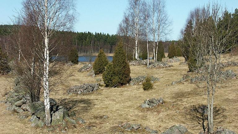 Gammal svensk hagmark med gräs, enar, lövträd och stenrösen. Foto: Lars Lundqvist/Flickr (CC)