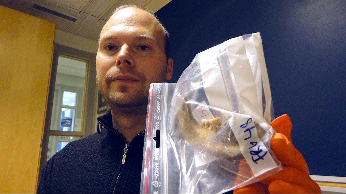 Genetikprofessorn Mattias Jakobsson hoppas kunna utvinna DNA från tänderna på den här gamla stenålderskäken.
