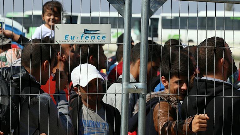 flyktingar bakom stängsel