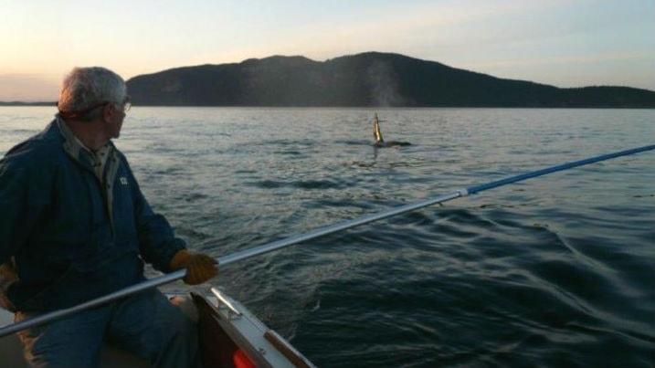 Forskaren Pete Schroeder sitter i en båt och samlar in prover från späckhuggares utandningsluft med hjälp av en lång aluminiumstång.