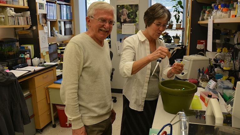 Nobelpristagare Paul Modrich och hans fru Vickers Burdett i labbet på Duke university. Foto: Niklas Zachrisson/Sveriges radio