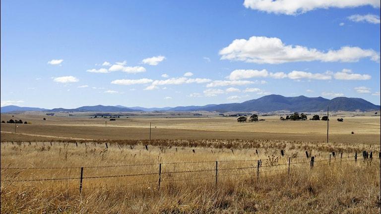 Sädesfält i Australien. Foto: Fir0002/Flagstaffotos/Wikimedia Commons, CC BY-NC
