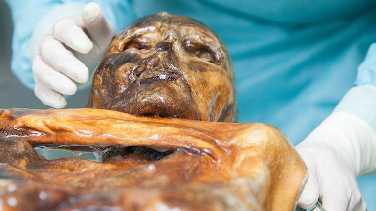 Gulnad mumie. Person i labbrock undersöker med vita handskar. Foto: © EURAC/Marion Lafogler