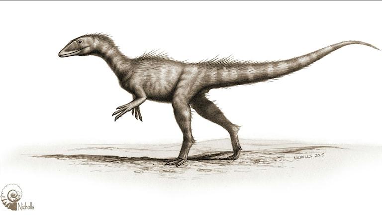 Målad bild av hur den två meter långa dinosaurien kan ha sett ut. Bild: Bob Nicholls